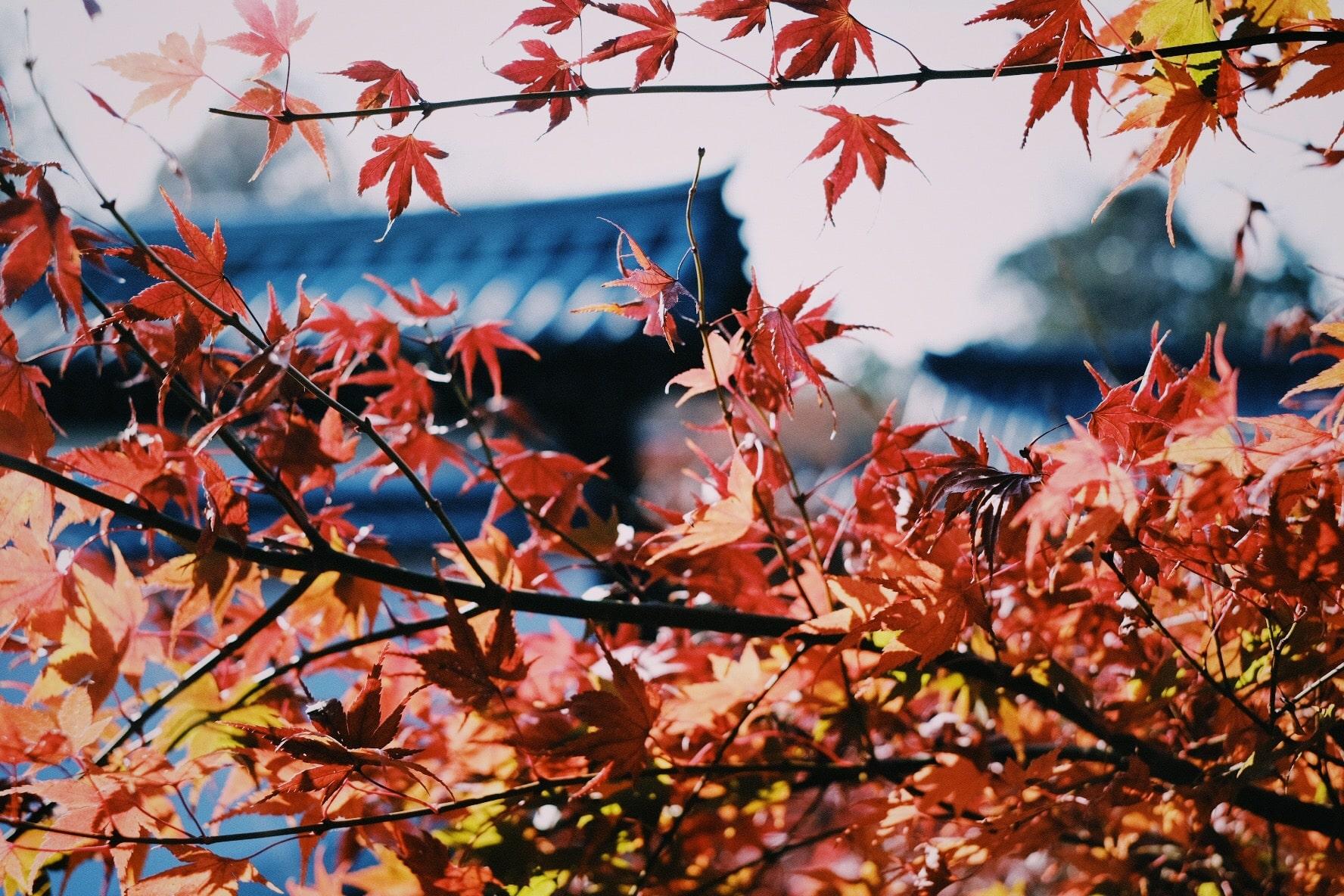 合宿で勉強会 &大人の修学旅行!東福寺の紅葉